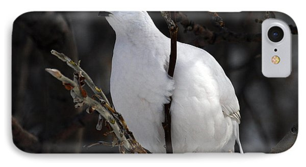 Willow Ptarmigan IPhone Case by Doug Lloyd