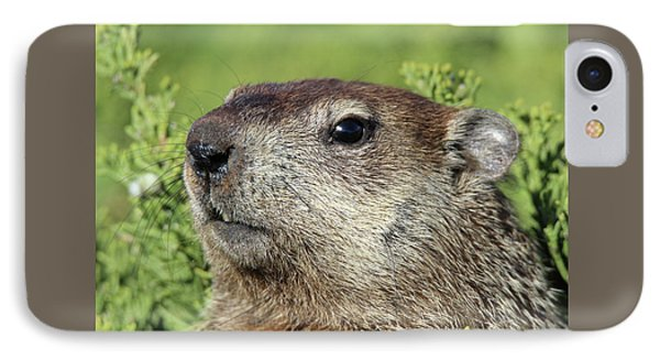 Woodchuck Calverton New York IPhone Case