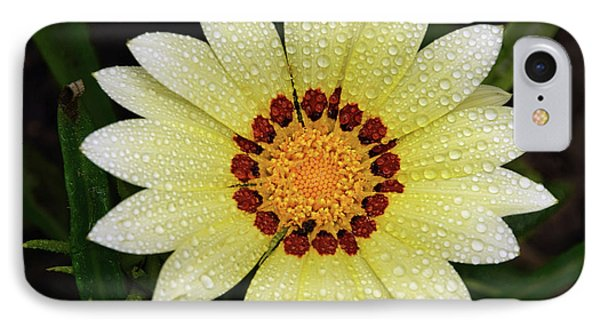 Nice Gazania IPhone Case by Elvira Ladocki
