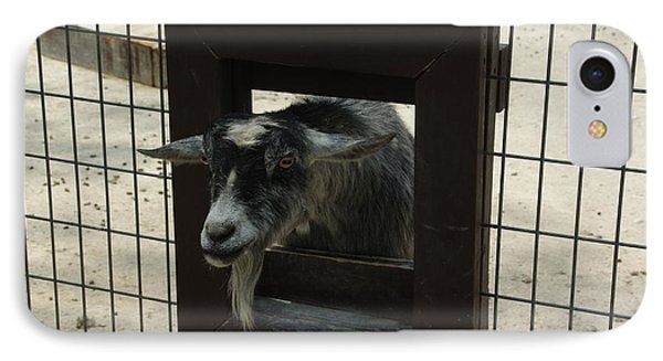 3d Tv Goat 1 IPhone Case by Robyn Stacey