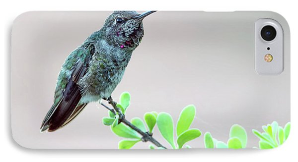 Anna's Hummingbird IPhone Case by Tam Ryan