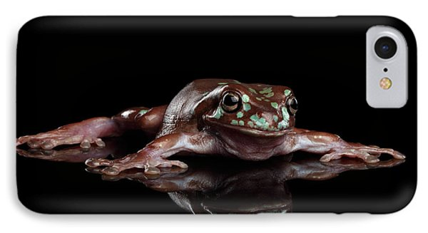 Australian Green Tree Frog, Or Litoria Caerulea Isolated Black Background IPhone Case by Sergey Taran
