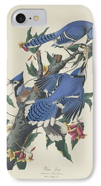 Blue Jay IPhone Case by Rob Dreyer