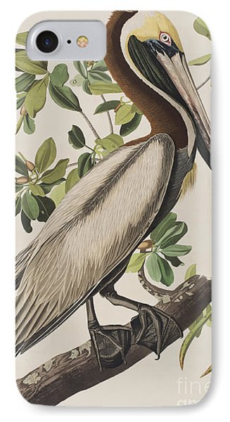 Brown Pelican  IPhone Case by John James Audubon