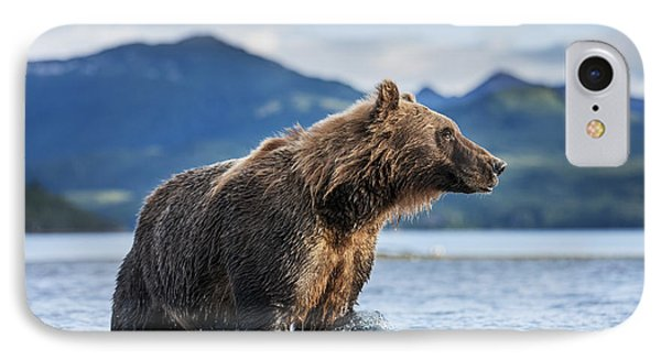 Coastal Brown Bear  Ursus Arctos IPhone Case by Paul Souders