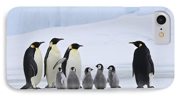 Emperor Penguins And Chicks IPhone Case by Jean-Louis Klein & Marie-Luce Hubert