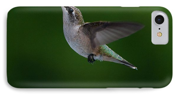 Female Ruby Throated Hummingbird IPhone Case by Brenda Jacobs