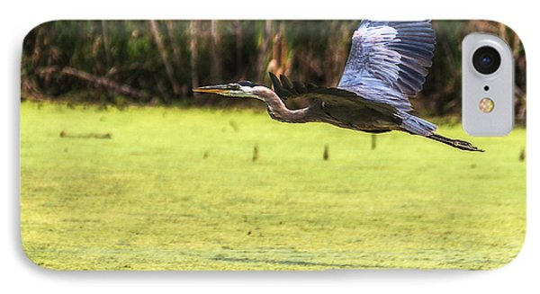 Great Blue Heron In Flight IPhone Case by Edward Peterson
