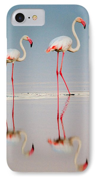 Greater Flamingos Phoenicopterus Roseus IPhone Case by Panoramic Images