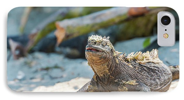 Marine Iguana On Galapagos Islands IPhone Case by Marek Poplawski