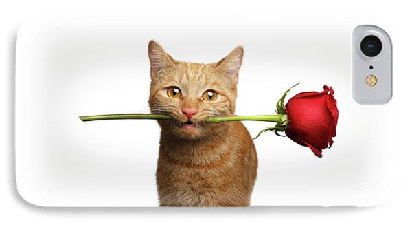 Portrait Of Ginger Cat Brought Rose As A Gift IPhone Case by Sergey Taran