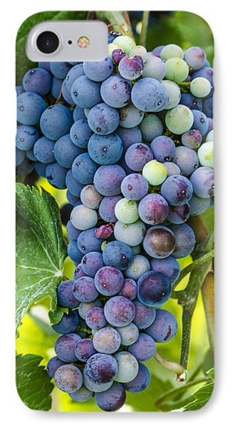 Red Wine Grapes IPhone Case by Teri Virbickis
