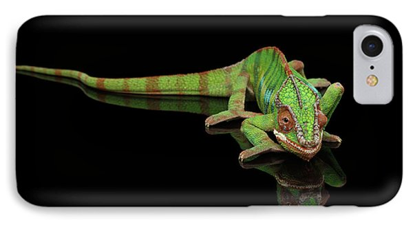 Sneaking Panther Chameleon, Reptile With Colorful Body On Black Mirror, Isolated Background IPhone 7 Case