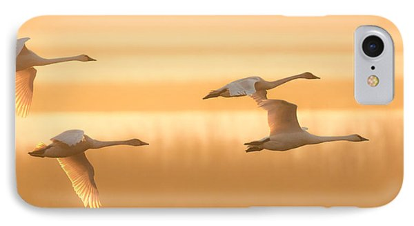 IPhone Case featuring the photograph 4 Swans by Kelly Marquardt