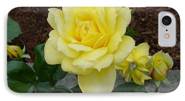4 Yellow Roses IPhone Case by Shirley Heyn