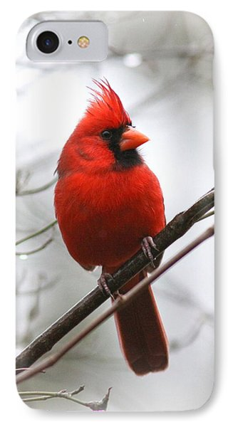 4772-001 - Northern Cardinal IPhone Case
