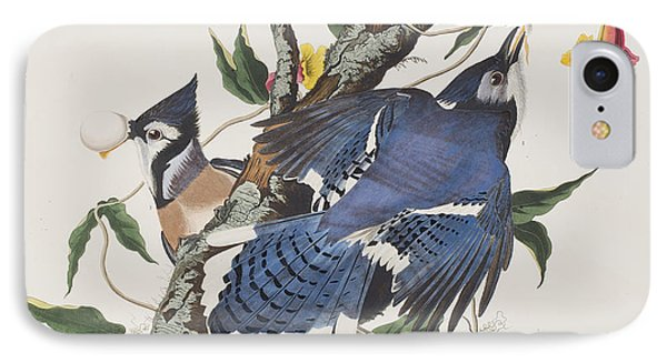 Blue Jay IPhone Case by John James Audubon