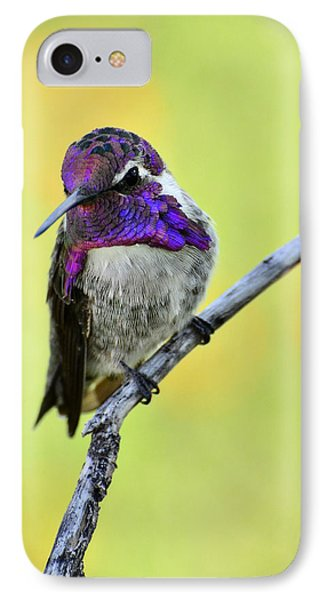 Costas Hummingbird  IPhone Case