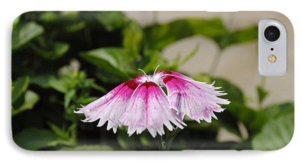 Dahlia Flower IPhone Case by Sumit Mehndiratta