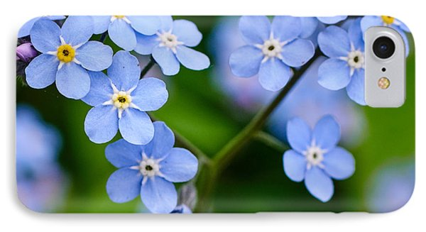 Forget Me Not IPhone Case by Jouko Lehto