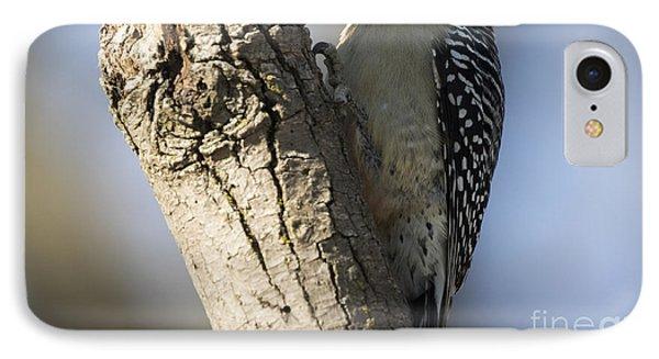 Red-bellied Woodpecker IPhone 7 Case