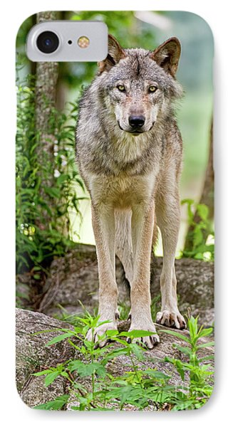 Timber Wolf Phone Case by Michael Cummings