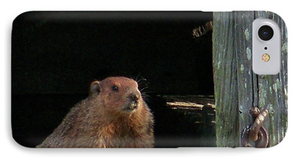 5003-groundhog IPhone Case by Martha Abell