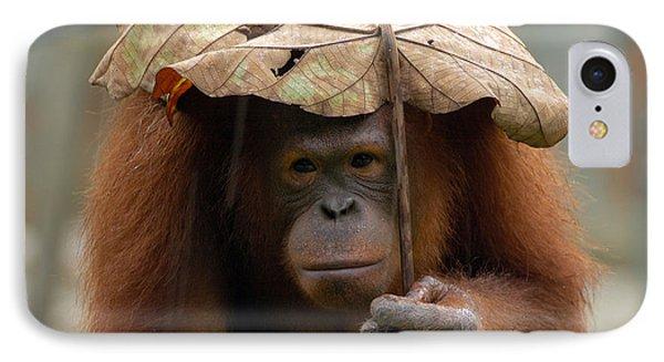 51522 Ape Orangutan IPhone Case