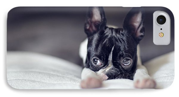 Boston Terrier Puppy IPhone Case by Nailia Schwarz