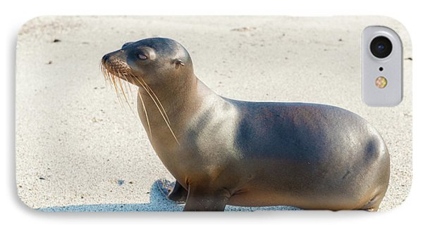 Sea Lion In Galapagos Islands IPhone Case