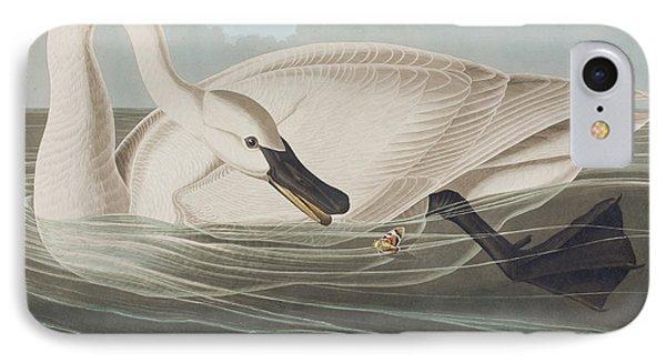 Trumpeter Swan  IPhone Case