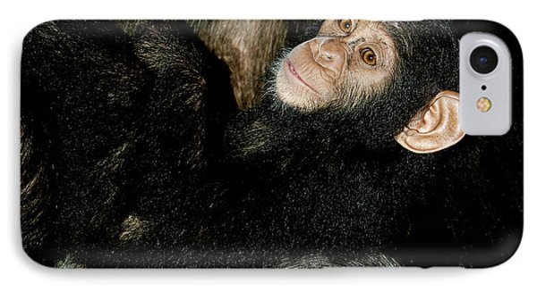 Chimpanzee Pan Troglodytes IPhone Case by Gerard Lacz