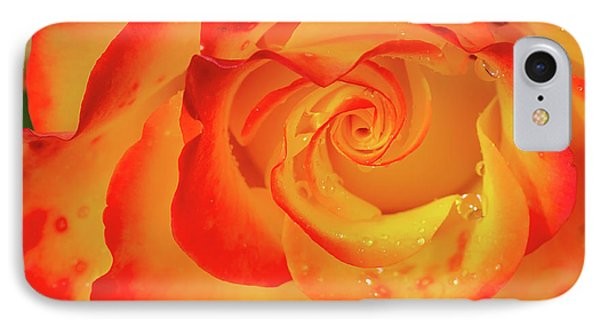 Rose Beauty IPhone Case by Shirley Mitchell