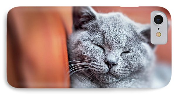 Young Cute Cat Resting On Leather Sofa. The British Shorthair Kitten With Blue Gray Fur IPhone Case