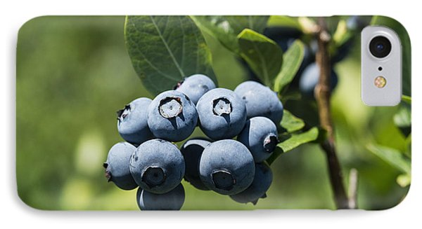 Blueberry Bush IPhone 7 Case by John Greim