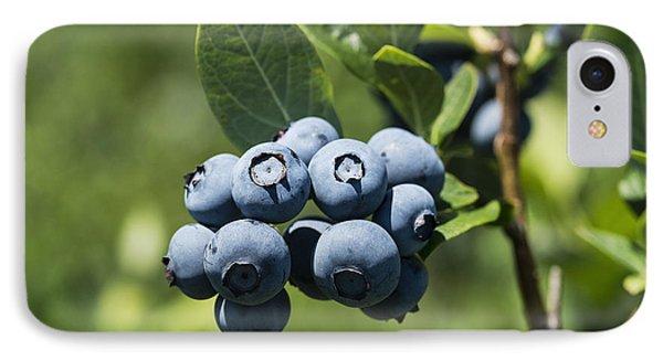 Blueberry Bush IPhone Case by John Greim
