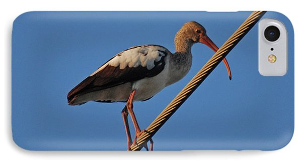 IPhone Case featuring the photograph 8- Brown Ibis by Joseph Keane