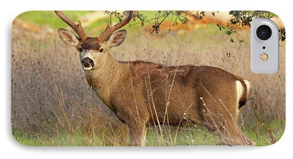 8-point Black-tailed Deer Buck Broadside IPhone Case by Max Allen