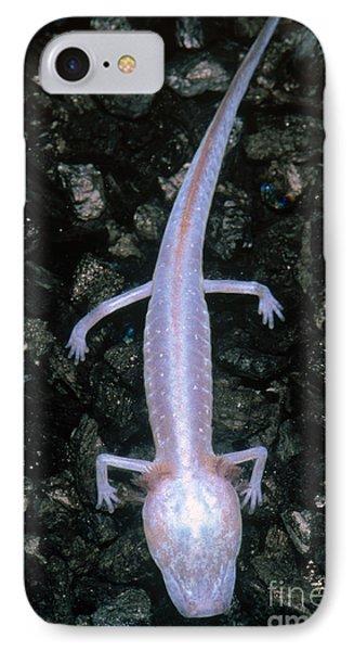 Austin Blind Salamander Phone Case by Dante Fenolio