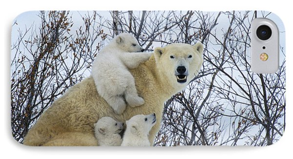 Polar Bear And Cubs IPhone Case by Jean-Louis Klein and Marie-Luce Hubert