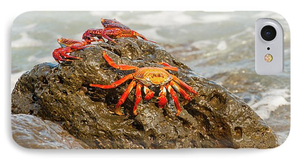 Sally Lightfoot Crab On Galapagos Islands IPhone Case by Marek Poplawski