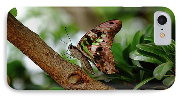 Tailed Jay IPhone Case