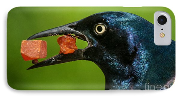 A Balanced Meal For A Grackle IPhone Case by Jim Moore