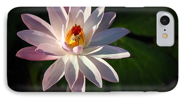 A Bee's Moment IPhone Case by Liesl Walsh