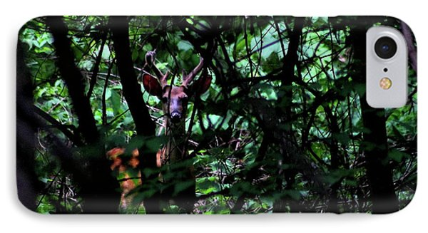 A Buck Peers From The Woods IPhone Case by Bruce Patrick Smith