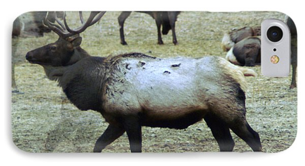 A Bull Elk  IPhone Case