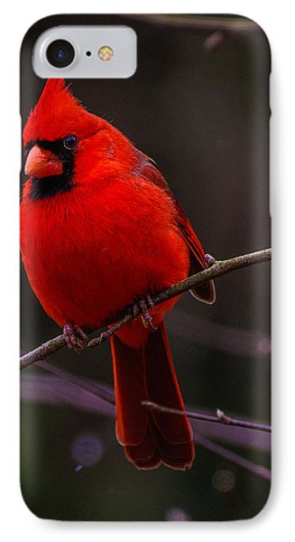 A Cardinal In January  IPhone Case by John Harding