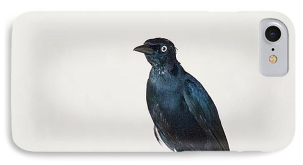 A Carib Grackle (quiscalus Lugubris) On IPhone Case by John Edwards