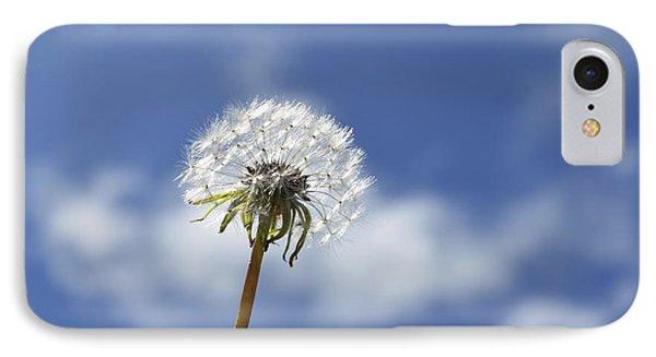 A Dandelion Flower IPhone Case by Alex King