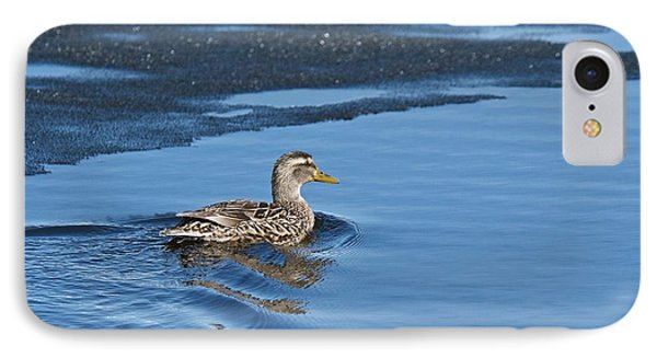 IPhone Case featuring the photograph A Female Mallard In Thunder Bay by Michael Peychich